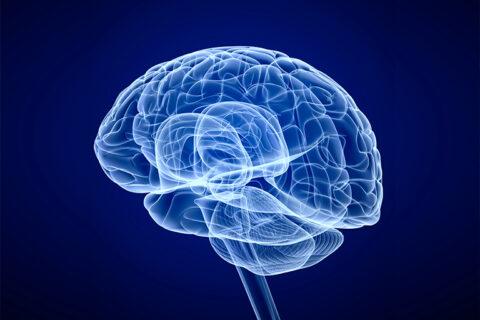 mentale-gezondheid-link-hersen-darm-as